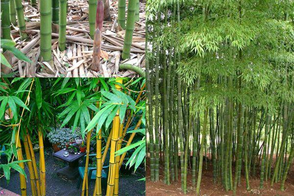 Đặc điểm của mành rèm tre trúc là nguyên liệu tự nhiên